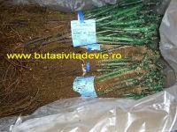 alphonse lavallee (2)