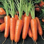 morcov carote F111